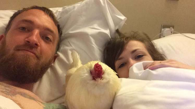 PIC FROM MERCURY PRESS (PICTURED: CHRIS AND VICTORIA LEIGH (BOTH 24) WITH DAVE THE CHICKEN) A randy cock proved three was definitely a crowd after gate-crashing a loved-up coupleís HONEYMOON by hiding in their romantic lodge and having sex with the brideís slipper. The brazen bird played gooseberry during Chris and Victoria Leighís romantic trip away last weekend by perching on the sofa watching TV, crowing in the bedroom and even having SEX with the brideís slipper. The couple, from Rhyl, Wales, had booked a long weekend away at Dyserth Falls Resort in Prestatyn (Sep 9-11) when the plucky chicken invited himself into their log cabin and made himself at home. The chicken, named Dave by Chris, had sneaked into the lodge soon after they arrived and was discovered hiding in the hallway. SEE MERCURY COPY
