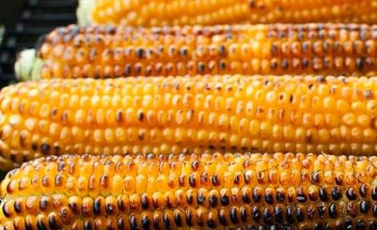 Vitaminat që përfitojmë nga misrat e pjekur