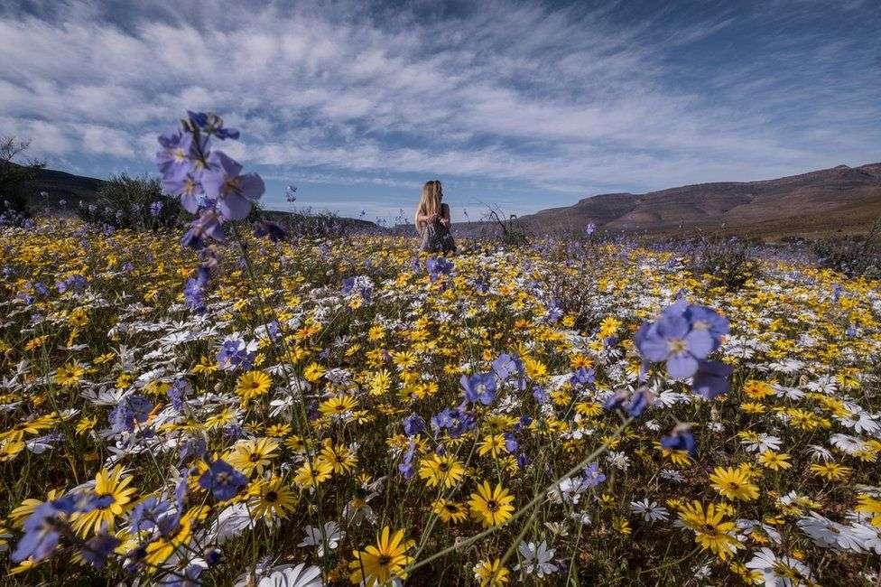 Lulet që ia ndryshojnë pamjen shkretëtirës së Afrikës Jugore