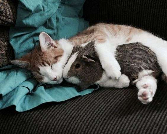 Edhe kafshët dijnë të jenë miq