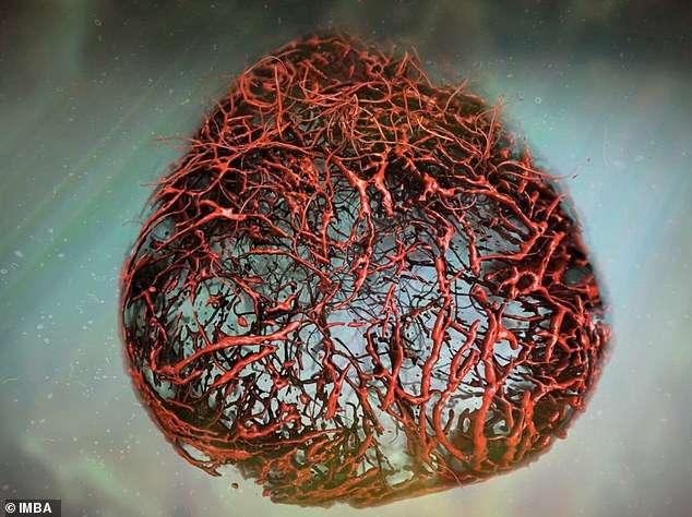 shkencetaret-ndertojne-enet-e-gjakut-ne-laborator
