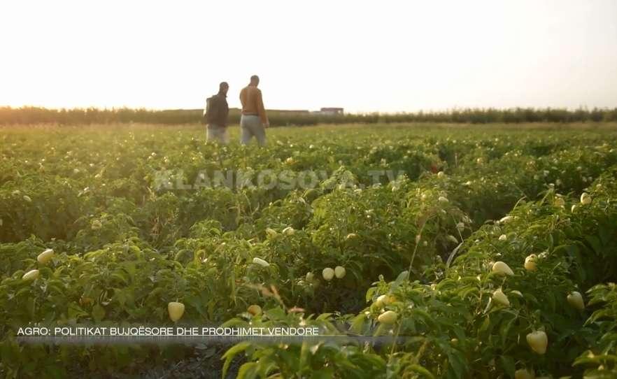 Politikat bujqësore dhe prodhimet vendore